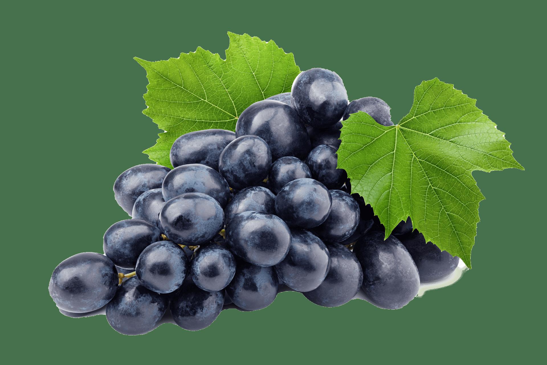 raisin crozes hermiage