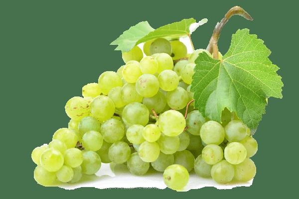 GRappe-de-raisins-blanc-les-chenets-crozes
